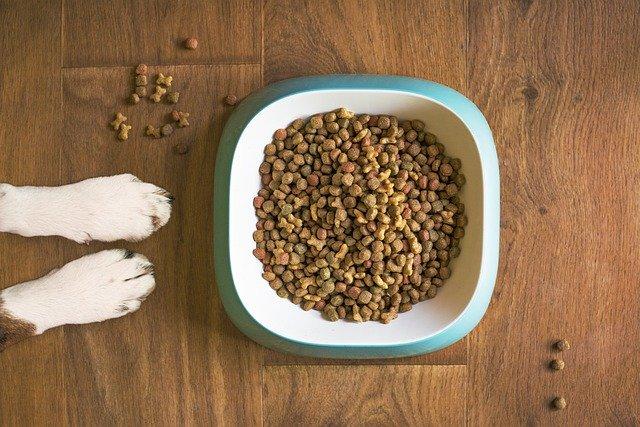 pes u misky granulí
