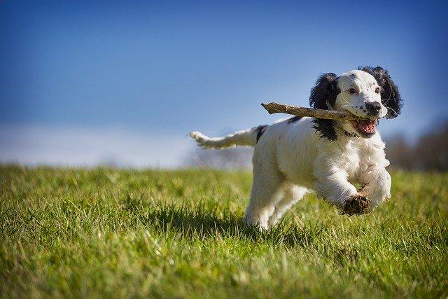 pes co běží a má klacek